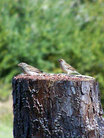 two stumped birds