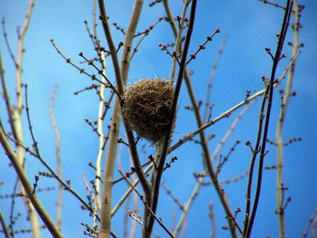 bird nest Stok Fotoğraf