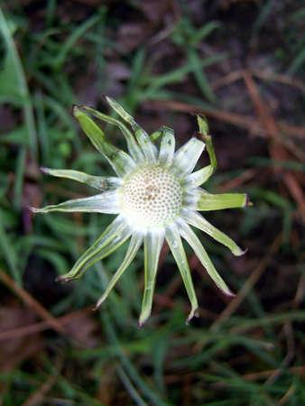 flower no more