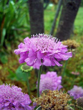 paarse perfectie