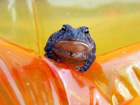 froggy posing