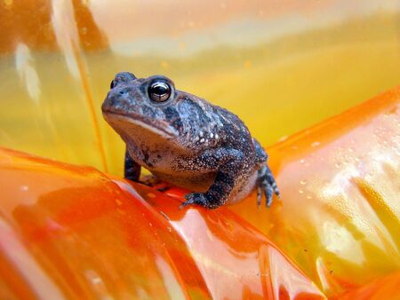 small frog on a float Imagens