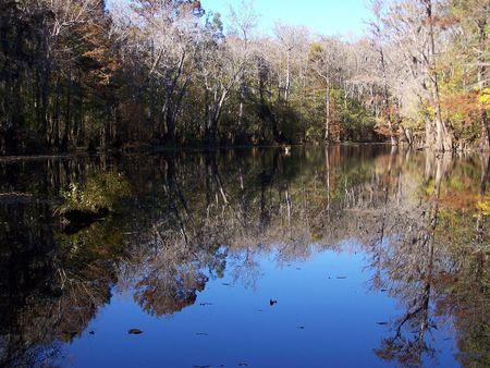 reflective: reflective beauty