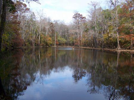 reflective: reflective lake