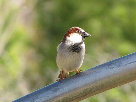 multicolored bird on a pole