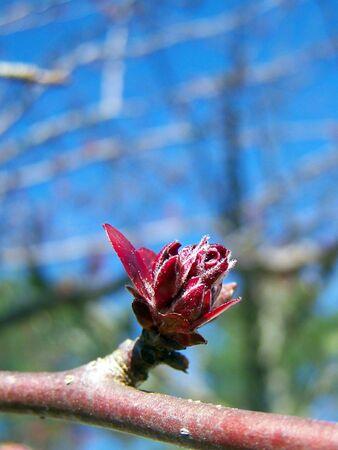 spring beauty Imagens