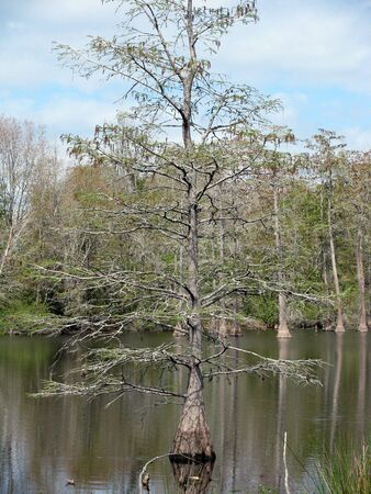 mature tree in water Stok Fotoğraf