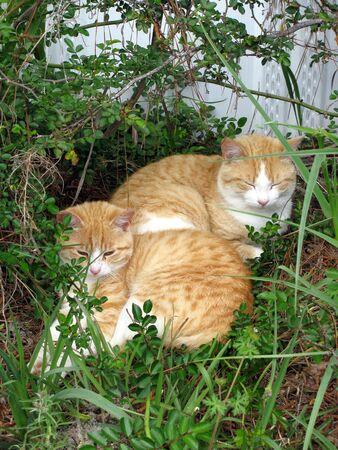 two orange kitties Stok Fotoğraf