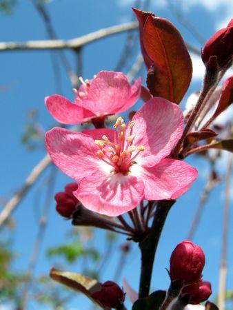 pink and pretty Stok Fotoğraf
