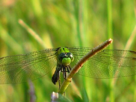 dragonfly expression