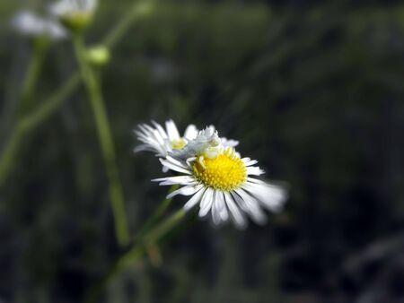 tiny creature Stok Fotoğraf