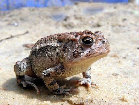 frog pose Stok Fotoğraf