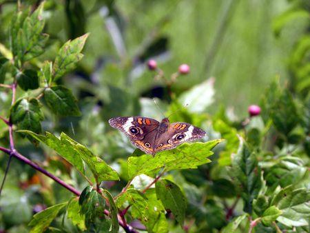 butterfly blending in