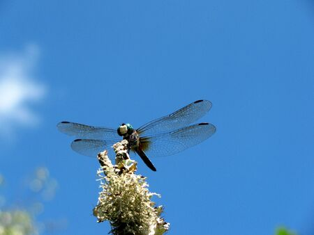 dragonfly and a blue sky