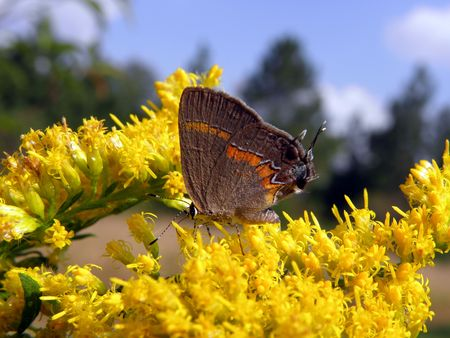 small butterfly on flower