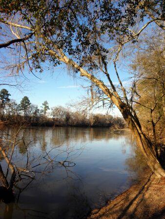 altamaha river bank view