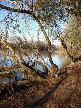 along the riverbank of the altamaha