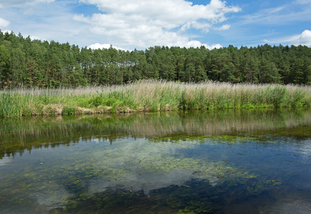 fields and meadows: Poland in summer.Pomerania.Brda river.Wild and unregulated river flowing picturesquely among the fields, meadows and forests.Horizontal view. Foto de archivo
