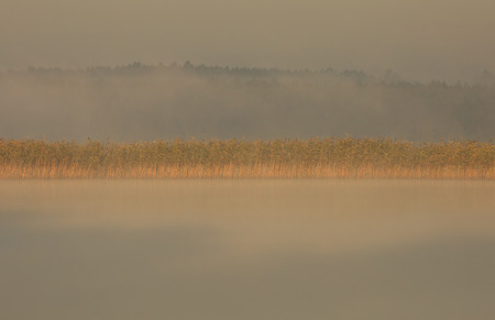 overexposed: Poland.Bory Tucholskie National Park in August.Morning fog on the lake, overexposed light of the rising sun.Horizontal view.