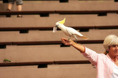 show bill: Jurong Bird Park, Singapur-2008.Cockatoo Cacatuinae turistas que se sienta en la mano de una mujer de Europa y tiene en su pico de 20 d�lares, Jurong Parque de las Aves en Singapur en vista 2008.Editorial.Horizontal. Editorial