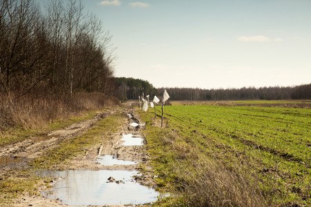 winter wheat: Poland, image of muddy and full of puddles road leading into the distance, a piece of winter wheat field, in early spring landscape. Horizontal view.