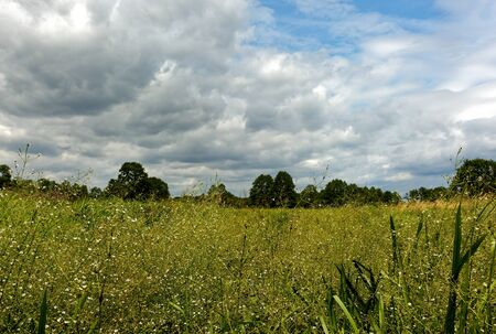 dense: Beautiful summer landscape with wet meadow overgrown with dense, tall vegetation under blue sky with clouds in summertime, Poland. Horizontal view.