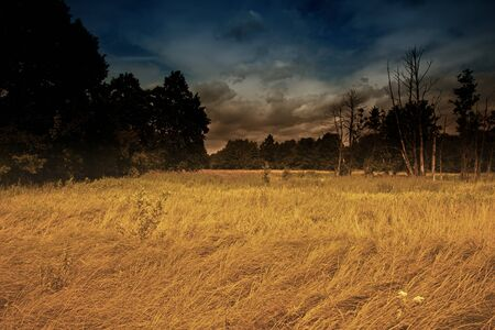 dramatic sky: The mysterious landscape of riverside meadows and wetlands with dramatic sky and yellow, dry grasses. The effect obtained by the help of filters. Interesting illustration in vintage style. horizontal view Stock Photo