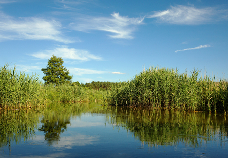 corridors: Corridors water lakes among the thick reeds and marshes in summer under blue sky with white clouds in poland, Bory Tucholskie. Horizontal view. Stock Photo