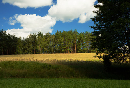 river view: Gren meadows ,field and forest near Chocina river in Bory tucholskie National Park in Poland under blue sky with white clouds.Horizontal view.