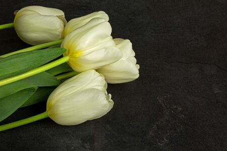Four white tulips on arranged in the lower left corner of the old, black, stone table. Close, flat, horizontal view from top Reklamní fotografie