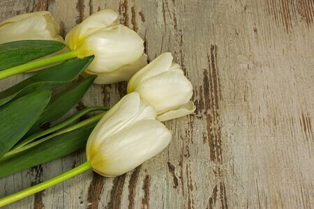 Four white tulips on old wooden table in a vintage style with a copy space on the right stronie.Flat, top, horizontal view. Reklamní fotografie