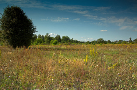 Meadow in August with flowering grasses and herbs, under blue sky with white clouds in Poland.Horizontal view