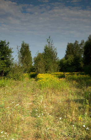 Path through a forest meadow covered with blooming grasses and herbs in summer.Polska. Vertical view Reklamní fotografie