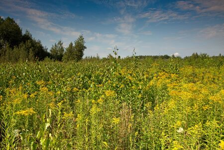 Dense grass, herbs and young wild meadow trees. Summer in Poland.Close, horizontal view.