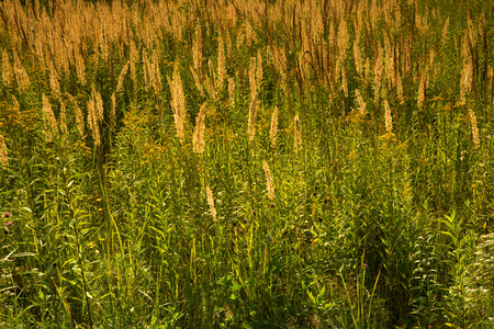 Grass in the meadow, view under the sun, in warm yellow light.Horizontal view Reklamní fotografie