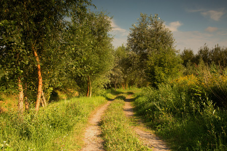 A dirt road among lushly overgrown meadows in summer in Poland.Horizontal view. Reklamní fotografie