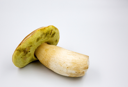 One beautiful, boletus edulis (Boletus edulis) isolated on a white background with clearly visible yellow underside of a hat and its structure.Close horizontal view