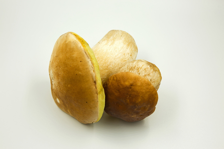 Two fresh boletus (Boletus edulis) isolated on white background. Clearly visible hat structure .Close, horizontal view.