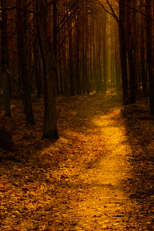 A forest road photographed against the light in warm orange tones. Poland in November. Vertical view.
