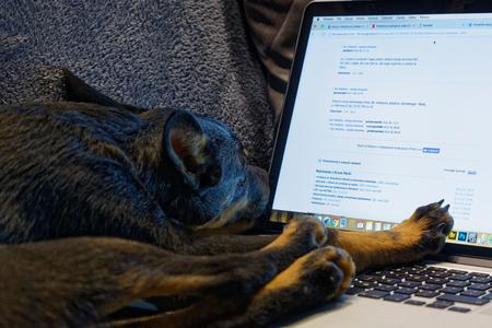 The Polish mongrel dog fell asleep on a working laptop. Close, horizontal view Reklamní fotografie