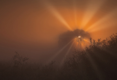 Split rays of the rising sun, highlight the thick fog in red, creating an amazing, mysterious atmosphere. October, autumn in Poland. Copy space on the right. Horizon view. Stok Fotoğraf
