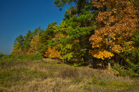 Landscape, view of the edge of the forest with colorful autumn leaves, a fragment of a meadow, with a clear blue sky. October, autumn in Poland Stok Fotoğraf