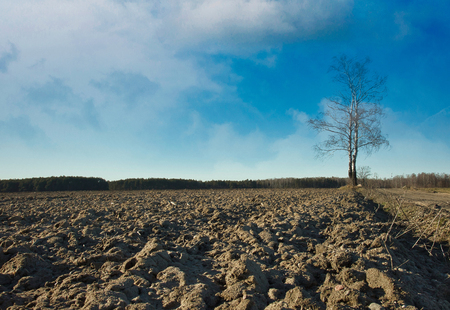 A plowed field with lonely birch on a background of blue sky in early spring.Poland.Horizontal view.