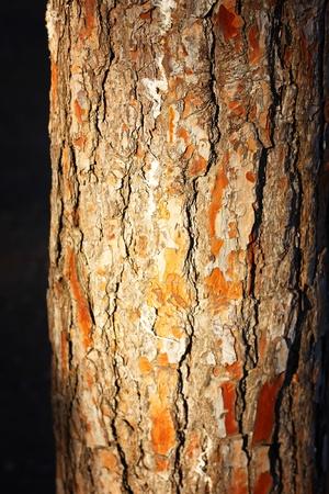 sawed: old tree trunk in sunlight