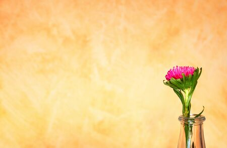 Flower in vase near yellow wall  photo