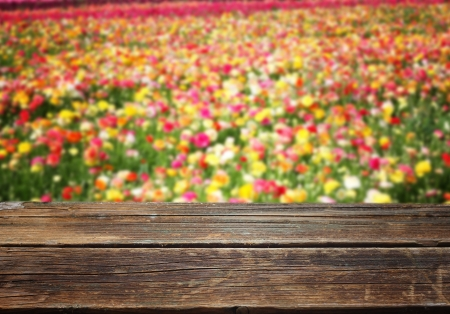 flowers in fied with wooden planks photo