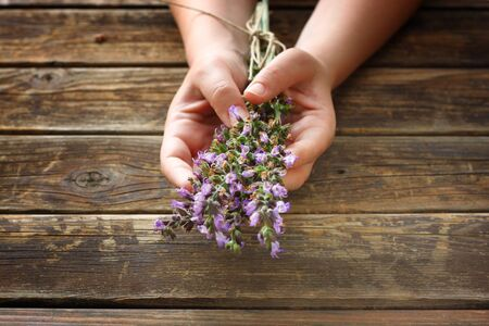 woman hands holding sage plant flowers Stock Photo - 21248275