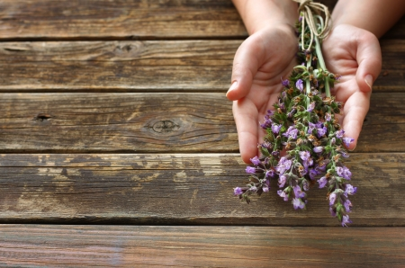 woman hands holding sage plant flowers  Stock Photo - 21248285