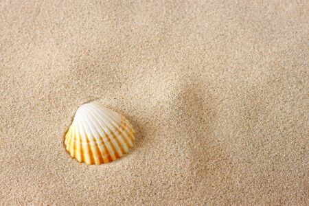 seashells on beach sand background photo