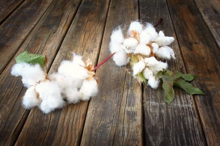 cotton flowers on wooden rustic table background photo